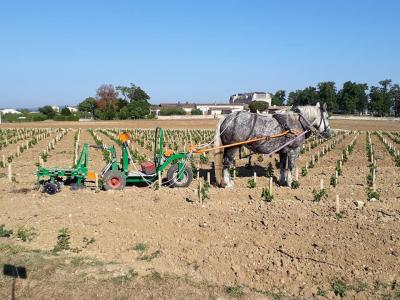 Vignoble saint emilion labour cheval
